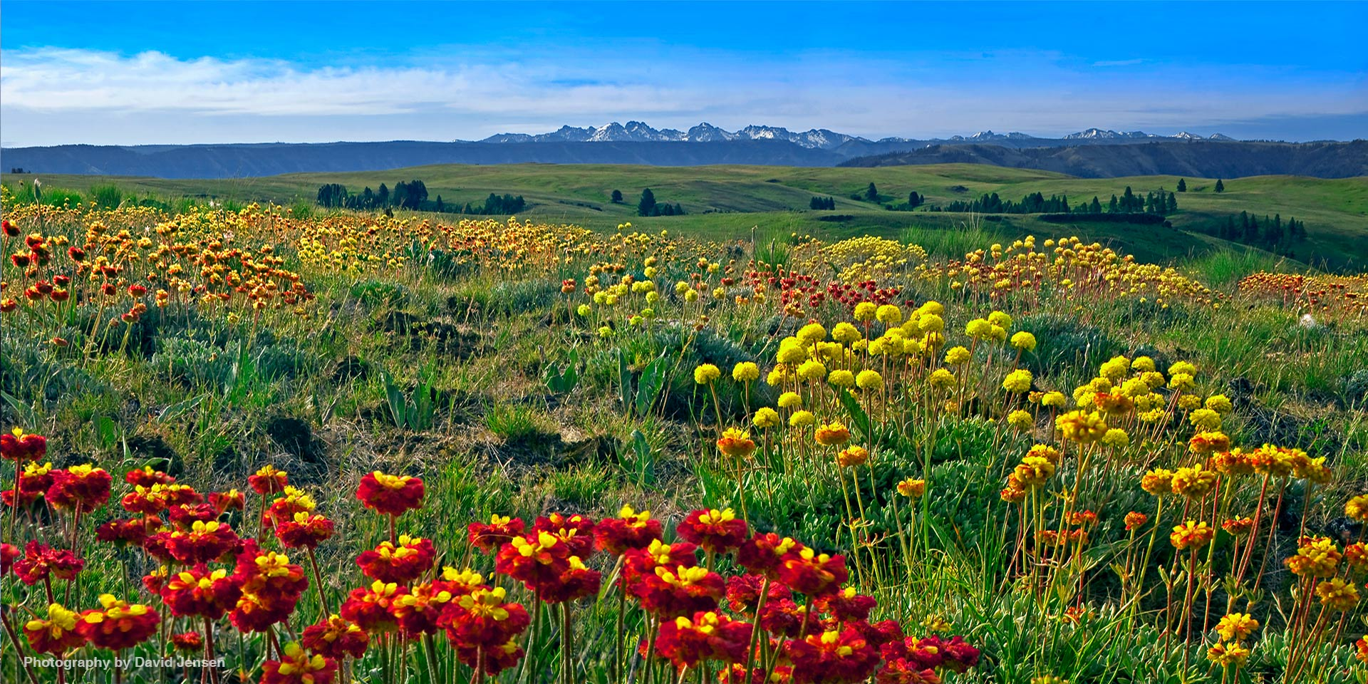 Mountain Prairie